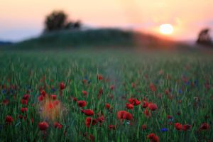Sunset at spring by SofKirke