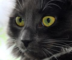 Feral Eyes by Forestina-Fotos