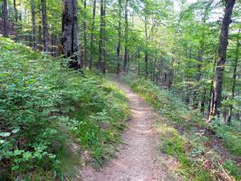 Forest path 1 by valsomir