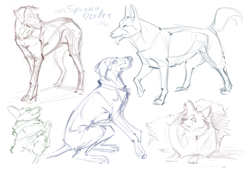 sketches of dogs by AlaxendrA