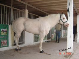 beautifull horse anatomy 2 by Dralam