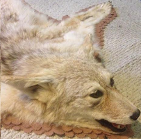 Calliff the Coyote Rug by D0gb0nes