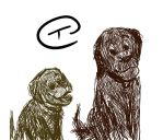 Dogs by Tarsicius