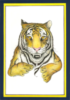 Tiger Drawing 2013 by andys184
