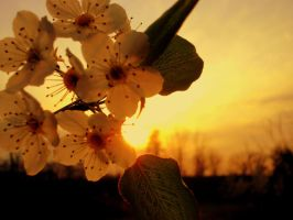 Flowers and Sun by Zilch17