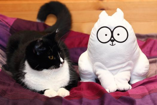 Simon's Cat with company by janernn