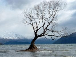 Tree on Lake Wanaka by Lambophil