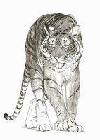 Tiger in Pencil by Alex-Harrier