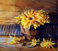 Transvaal daisies in a pot by tehub
