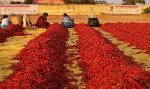 Fiery Hot Red Chillies by rajooda