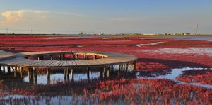 Red Seashore, Liaoning, China n DSC1895w by laogephoto