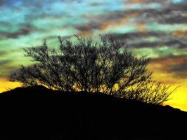 Tree at Sun Up by SharPhotography