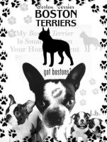 BostonTerrier brushes by darkonelh