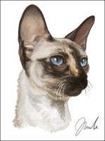 Cornish Rex Cat by chipset