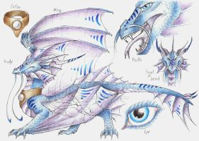 PCM: 2nd ref sheet for The18Dragon by Drerika