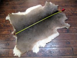 Cheap! Deer pelt for sale by tourmaline-83