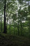 Forest 9 by sacral-stock