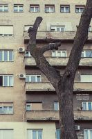 Urban Tree II by Dzodan