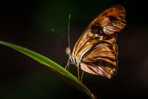 Single Strand by 904PhotoPhactory