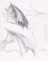 Draconis wing and tail study 2 by Spacer176