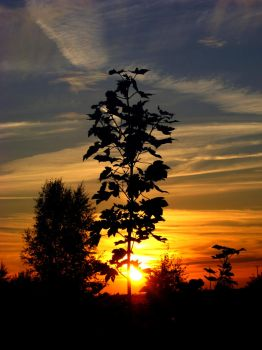 This Is The Sunset Tree by rekokros