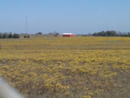 Yellow Fields And Red Barns by ThisIsMe13