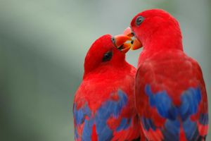 Parrot in love by wiltz