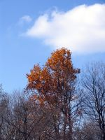 Last of the autumn leaves 1 by oldsoulmasquer