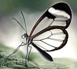 Another Glasswing... by Marmaluke