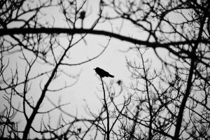 caught the darkness by hennatea