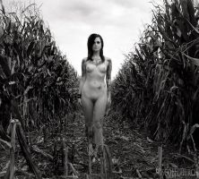 bobbie jo of the corn by scottchurch