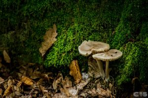 Mushrooms 6 by case15
