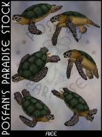 Animals 087 SeaTurtle by poserfan-stock