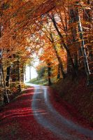 Route d'automne by ketoo