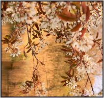Japanese Springtime by Buble