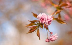 .. spring wp III .. by jsz