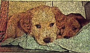 buddy and ginger pups by Bobguyperson