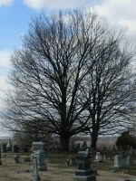 Tree with tombstones by BohemianHarlot