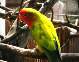 Parrot by Lills11