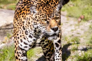 Mama Jag by 904PhotoPhactory
