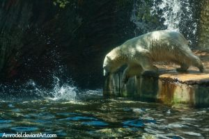 Polar Bear Jumps Into Water by amrodel