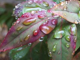 Raindrops on leaves 2 by Dwobbit