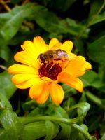 Busy bee by monikabuz