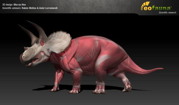 Triceratops muscle study by EoFauna