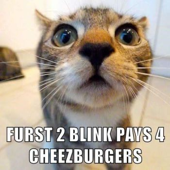 Furst 2 Blink Pays 4 Cheezburgers by SciFiNut2