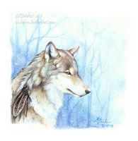 Blue Forest's Wolf by m-lupus
