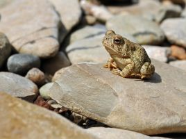 Tiny Toad by masscreation