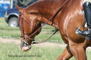 Quarter Horse Stock 65 by tragedyseen