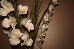 Orchids by SetYourSights