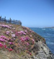 Fence on the Edge by mariposa116